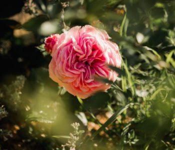 kytice do skoly - Kytky pro paní učitelku - Kytky od potoka