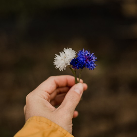 Kytkyodpotoka lucni kvetiny - Novoroční poděkování - Kytky od potoka