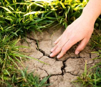 puda ekologicke zemedelstvi Kytky od potoka - Den Země - myšlenka ze mě - Kytky od potoka