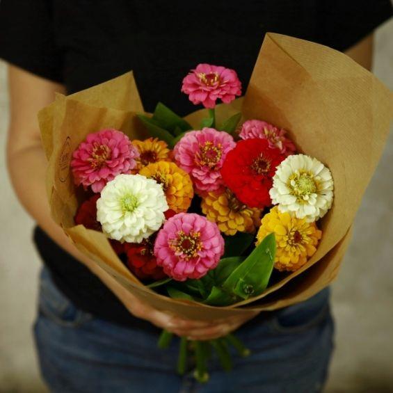 kytice cínií