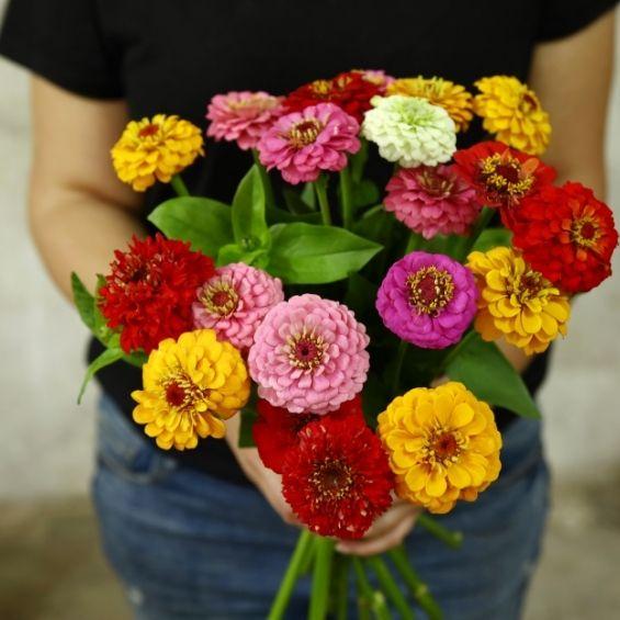 kytice cínií větší